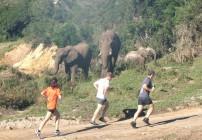 Save the Rhino Trail Run