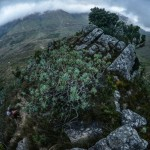 Jonkershoek Mountain Challenge 2014
